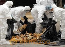 Bird flu researchers agree to 60-day halt