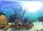 'Street view' goes undersea to map reefs, wonders