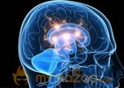 Cocaine rewires brain after single use, study says