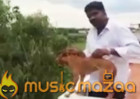 Man throws dog off roof in Chennai