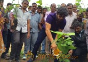 Tollywood Stars great initiative for Haritha Haram in Hyderabad